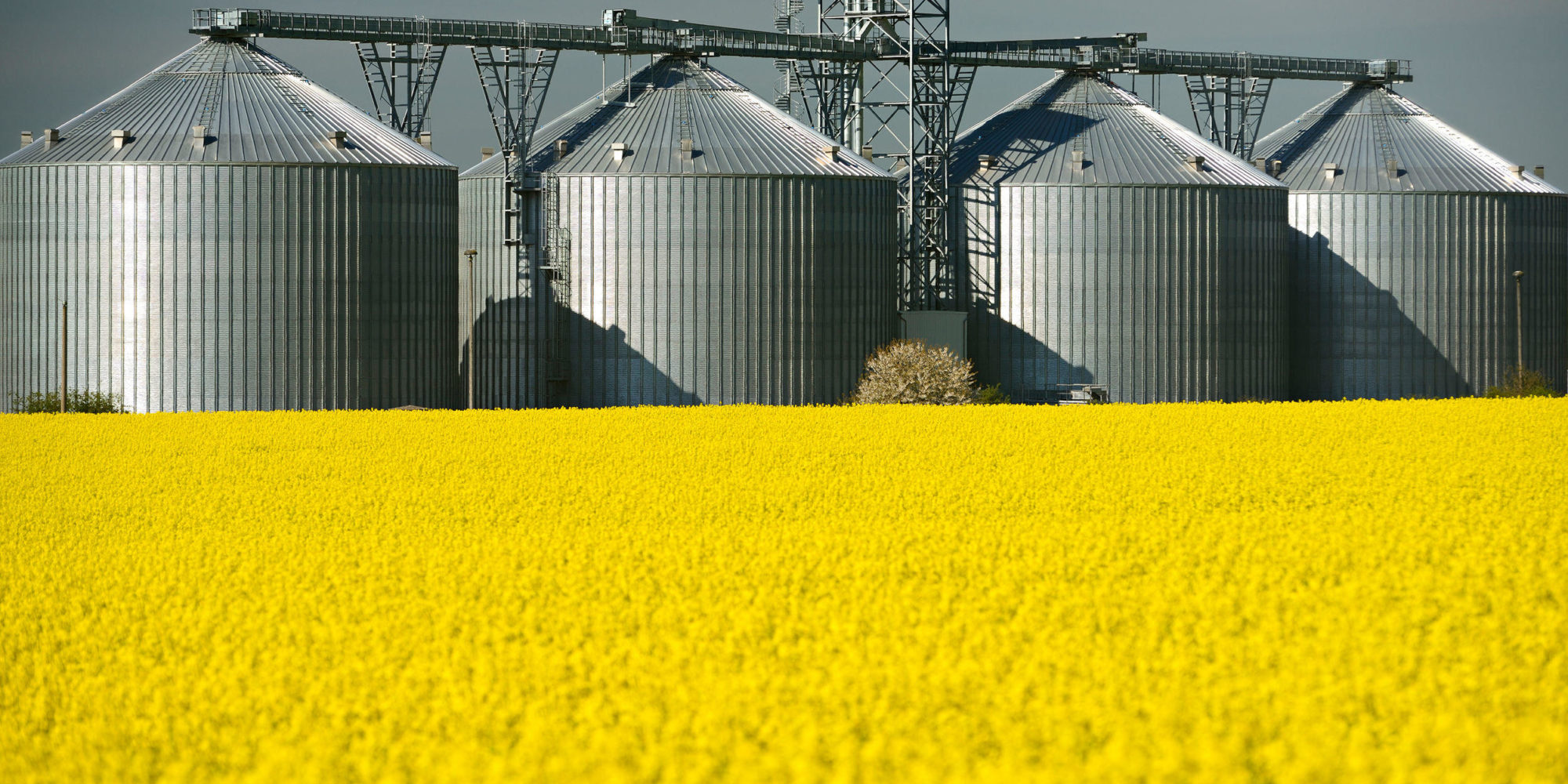 Ethanol & DDGS- DDGS output falls as ethanol production slows