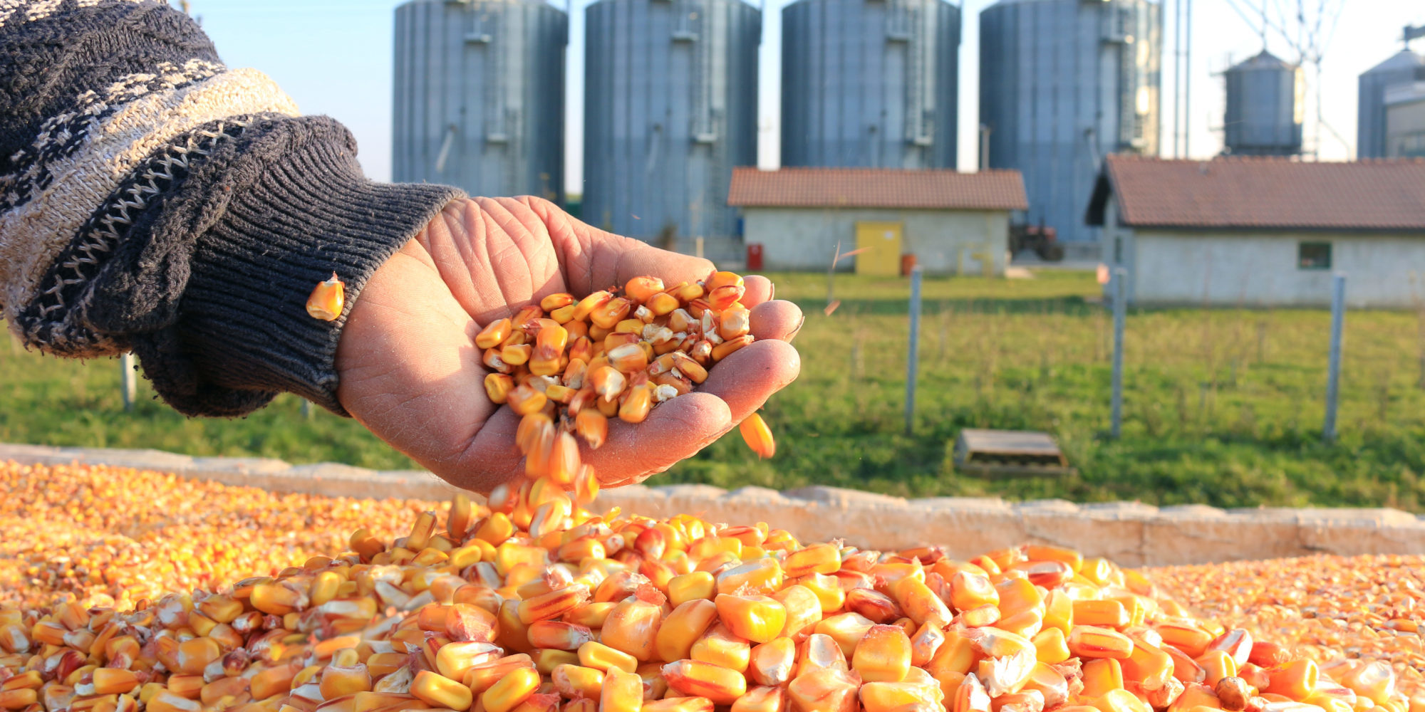 Where Are Organic Corn Prices Relative to the Historical Average?