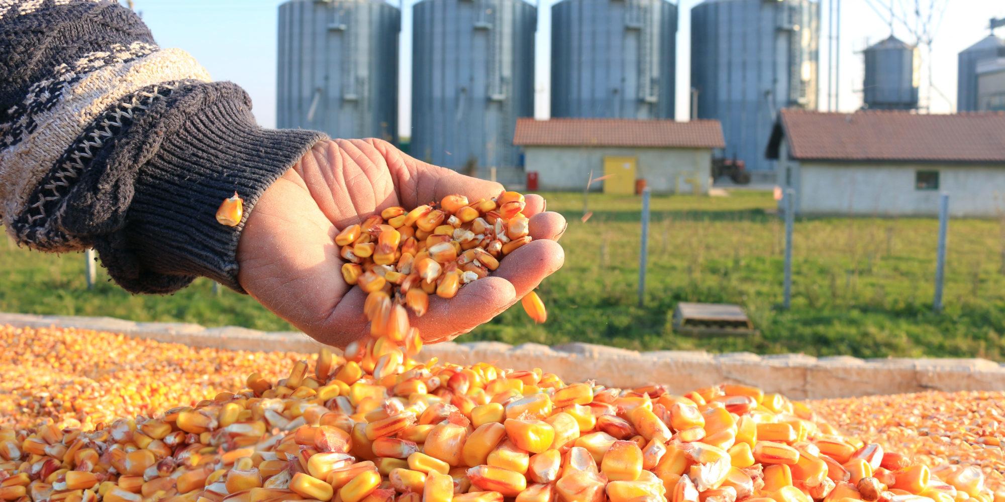 Organic Corn Import Forecast 2019/2020