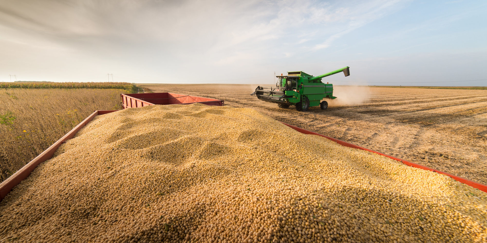 Corn Price Slides as Beans & Wheat Cautiously Move Higher