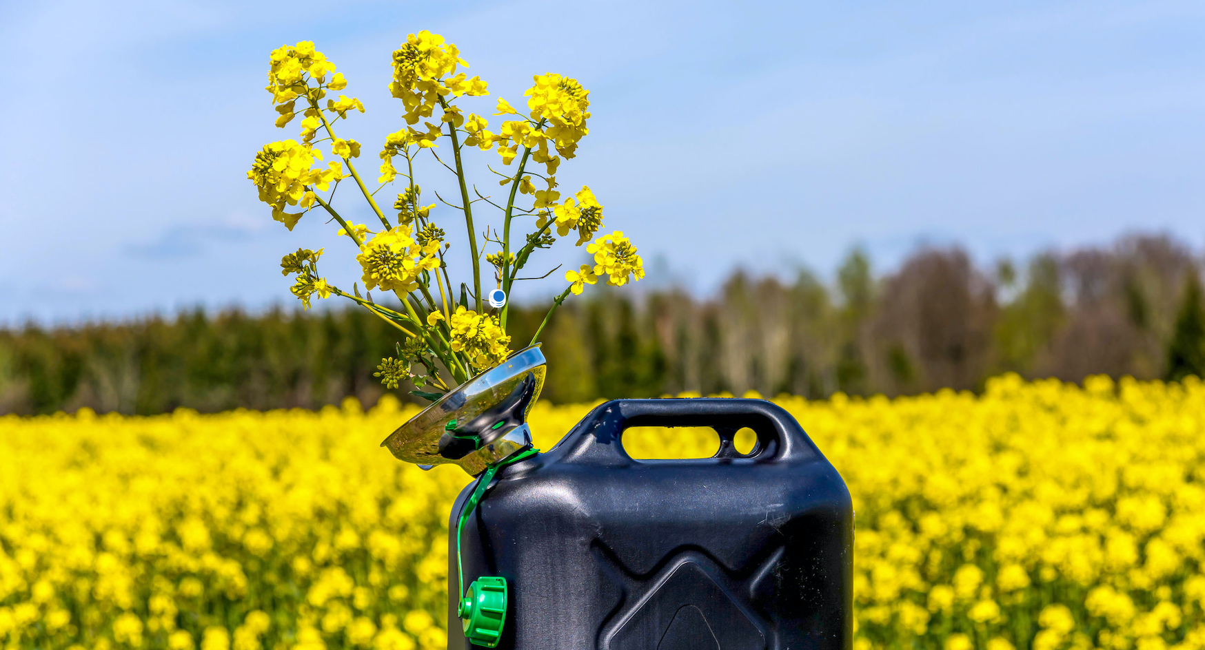 LCFS Biodiesel & Renewable Diesel Consumption Diverge from Estimates